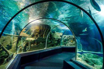 tunnel-v-okeanariume-adlera
